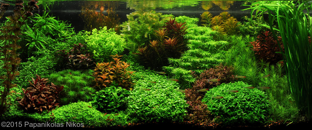 dutch-aquarium-aquascape-1.jpg